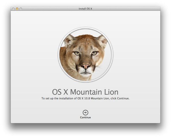 Mountain Lion (Installation dialogue)