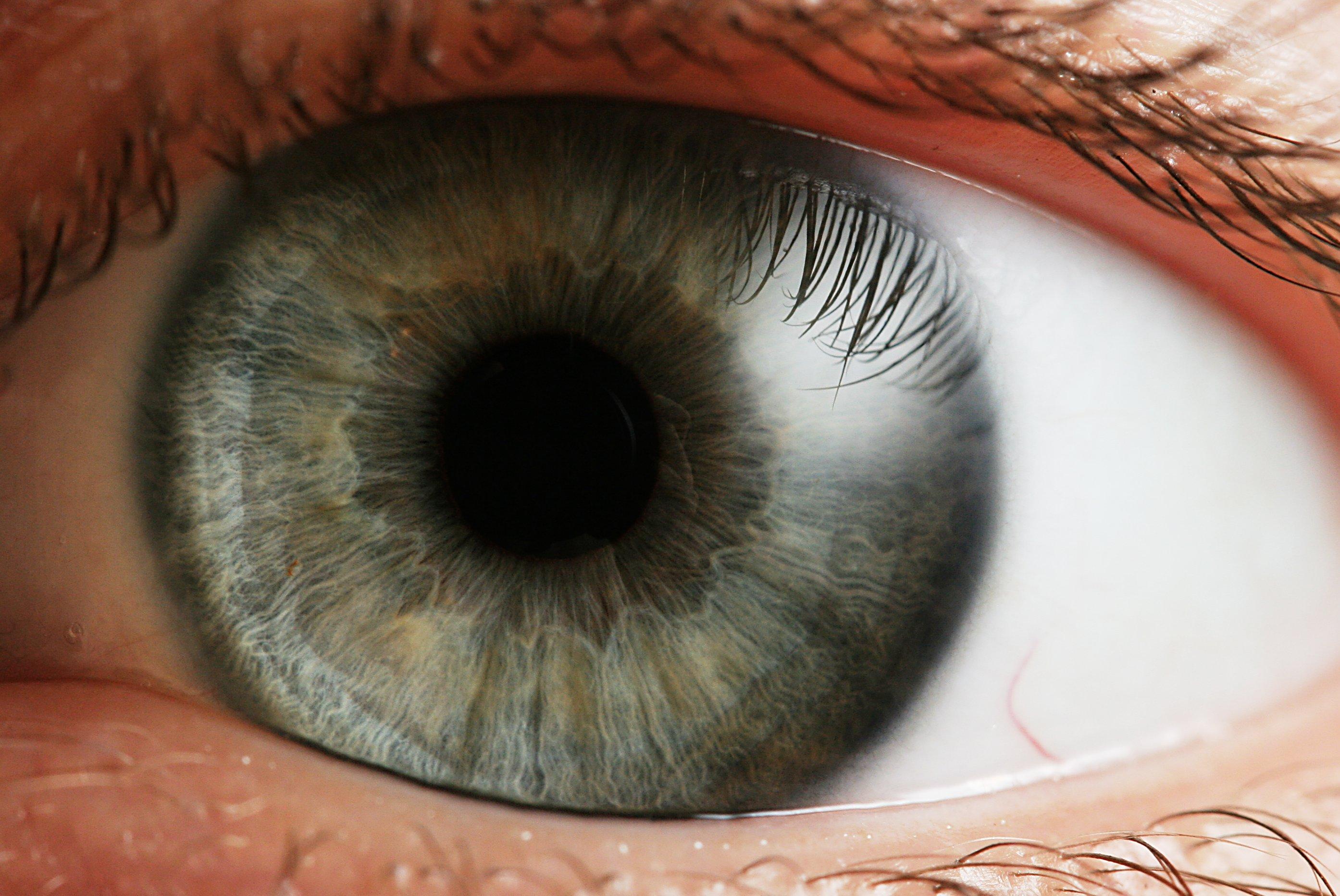 Human Iris (Wikipedia 002)