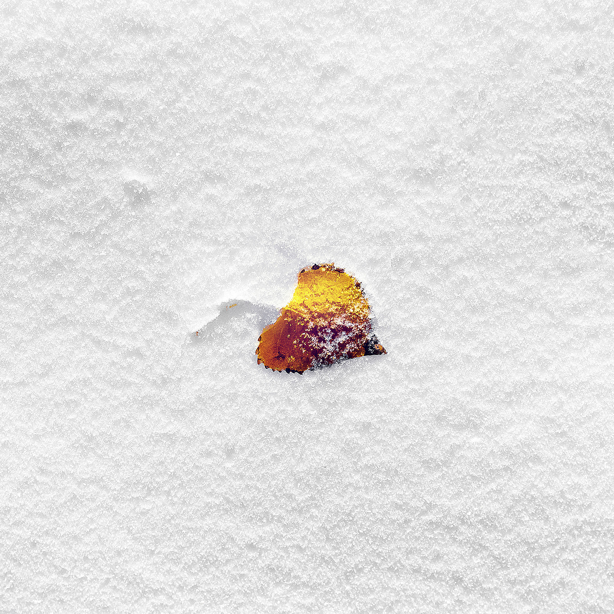 wallpaper-boo-201-snow-leaf-9-wallpaper