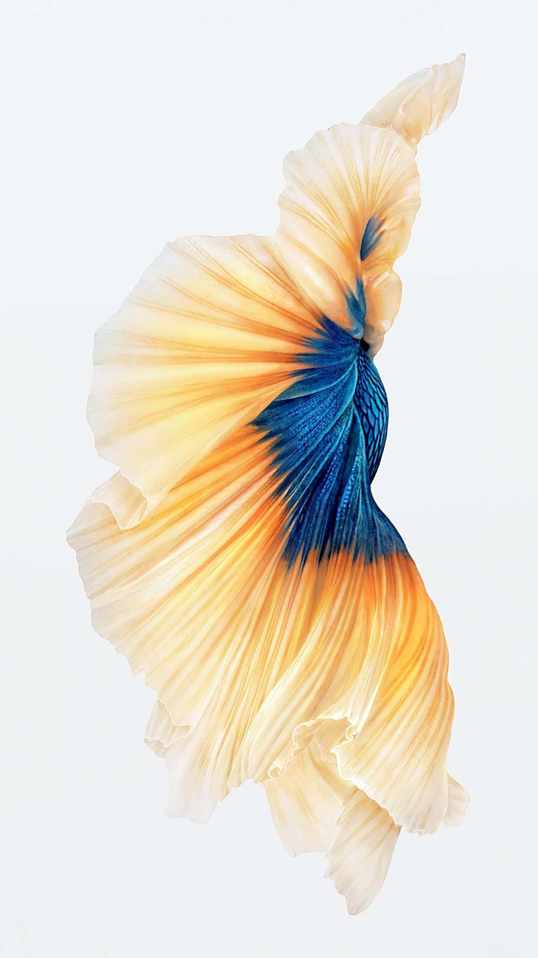 Iphone 6s Still Wallpaper Images
