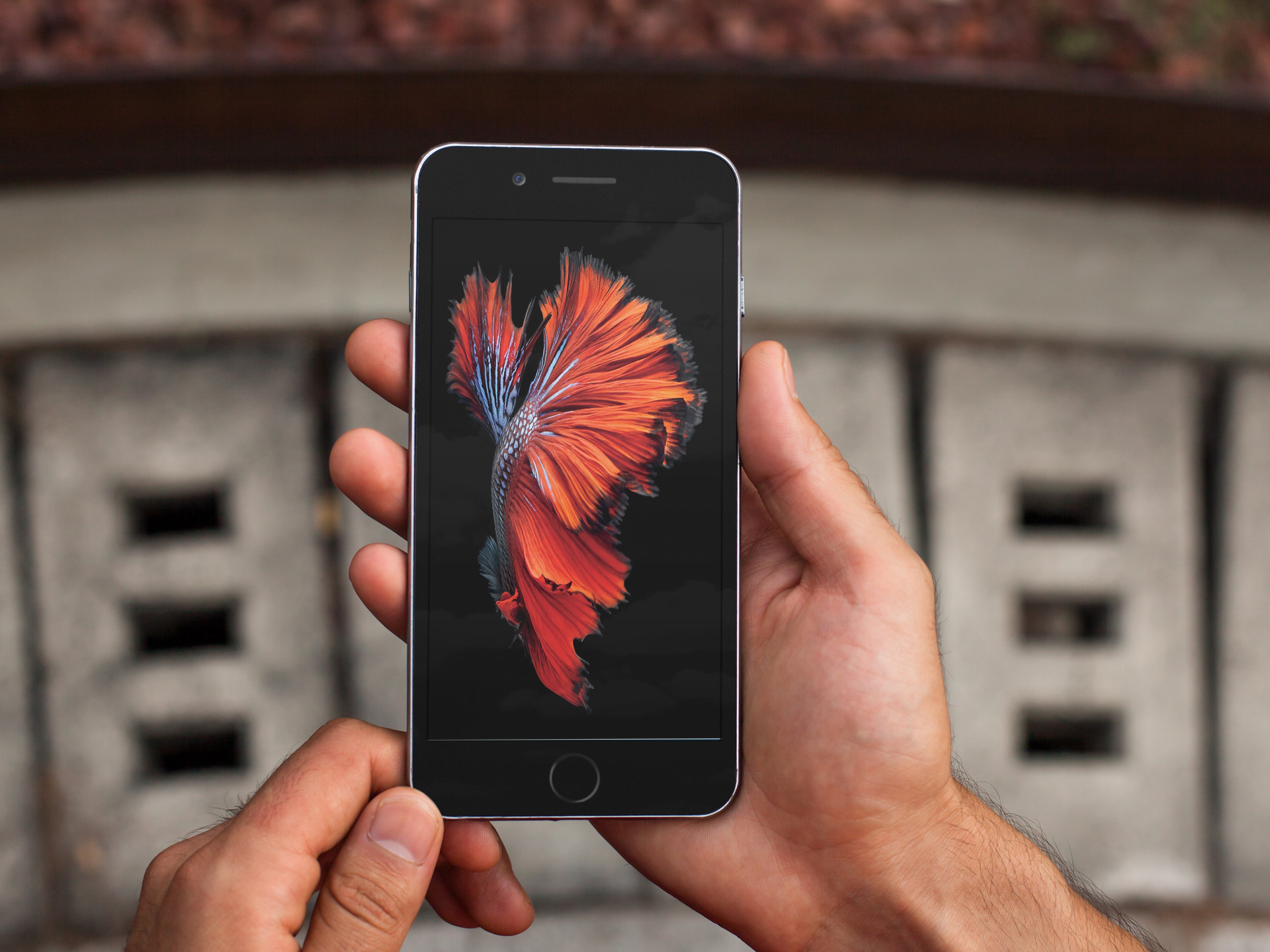 iPhone 6s Motion Wallpapers splash