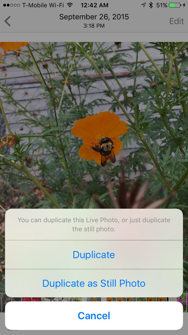 Duplicate Live Photos