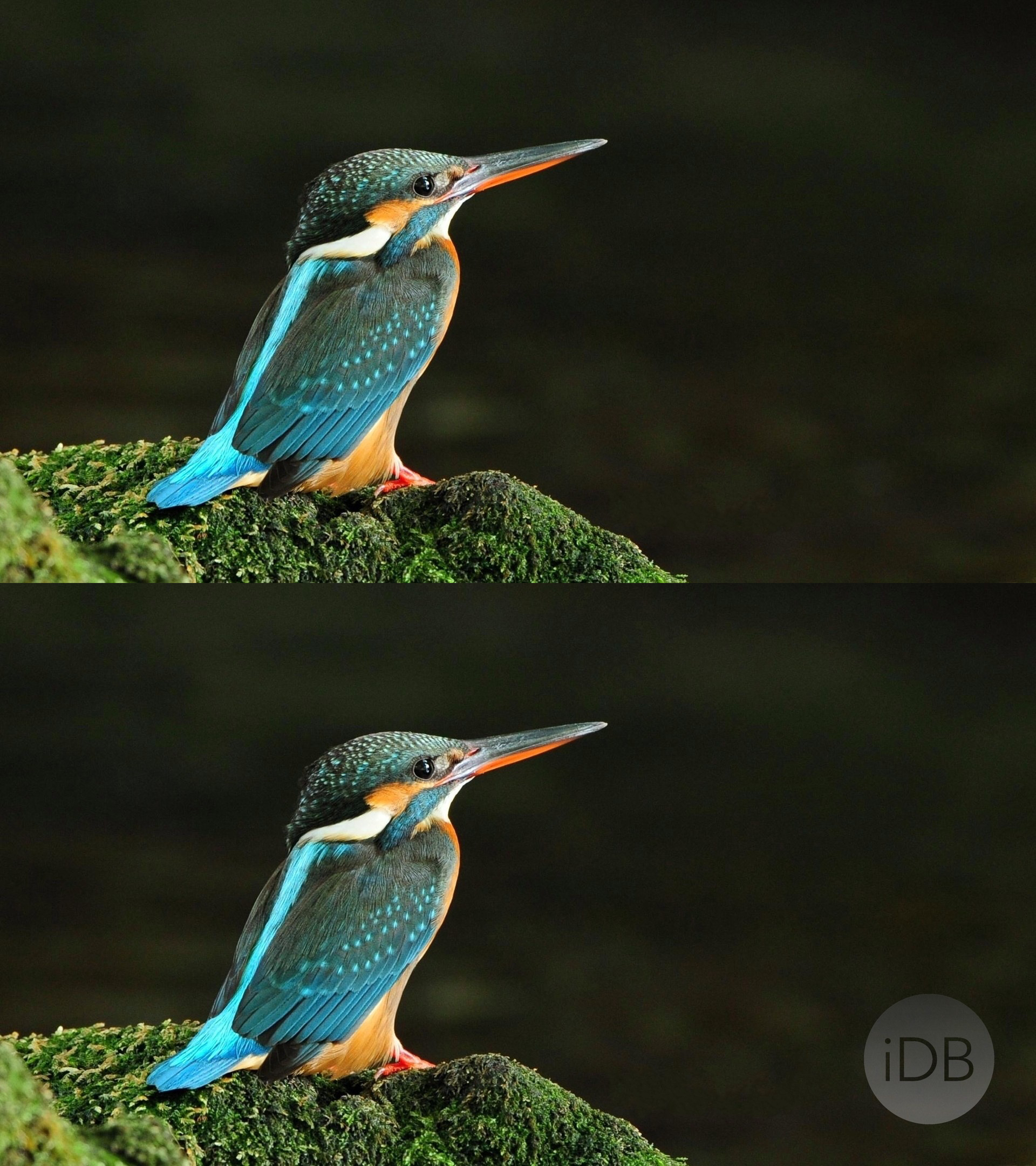 Bird Wallpaper Watermarked Before and After