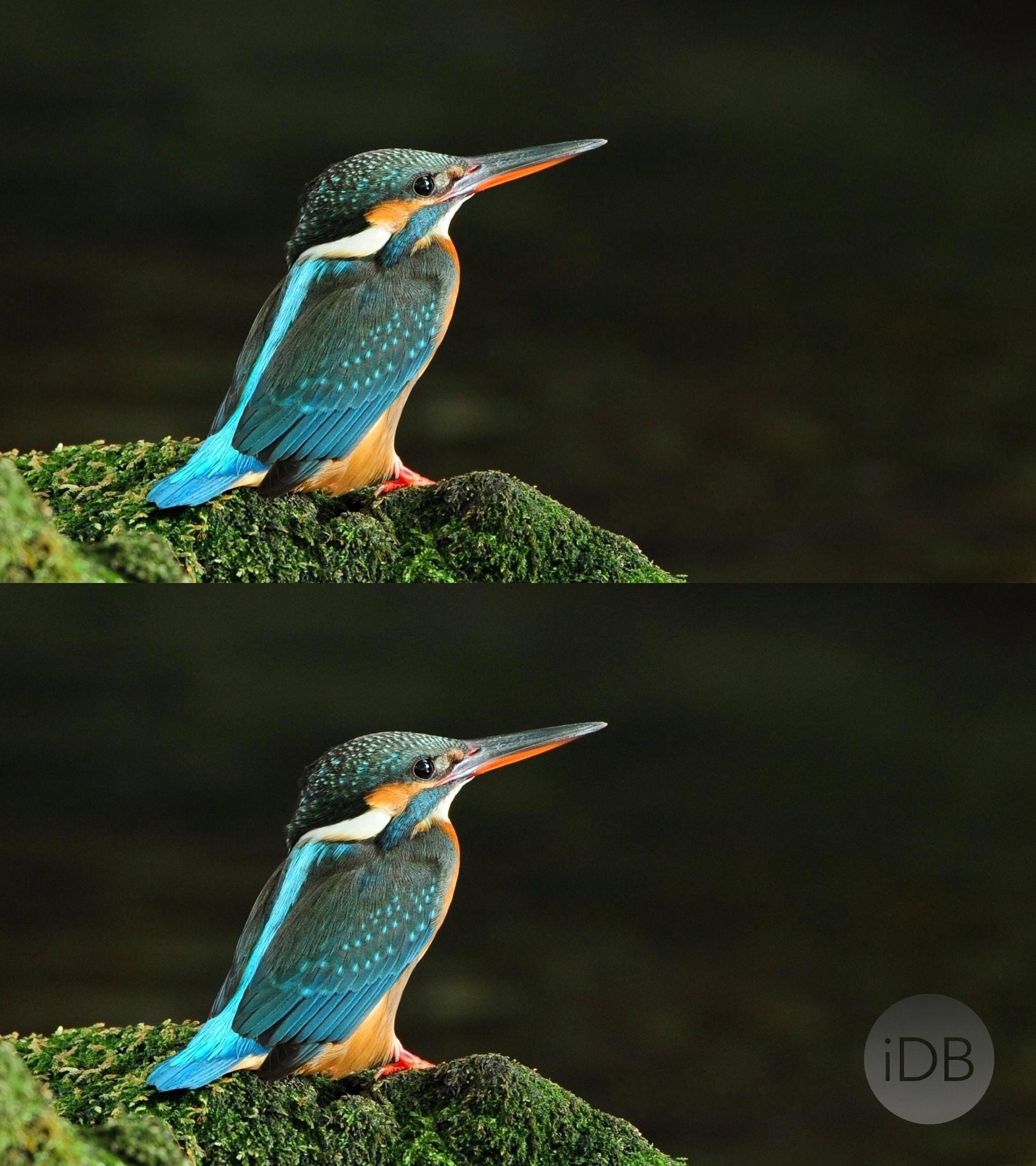 Bird Wallpaper Watermarked Antes y Después