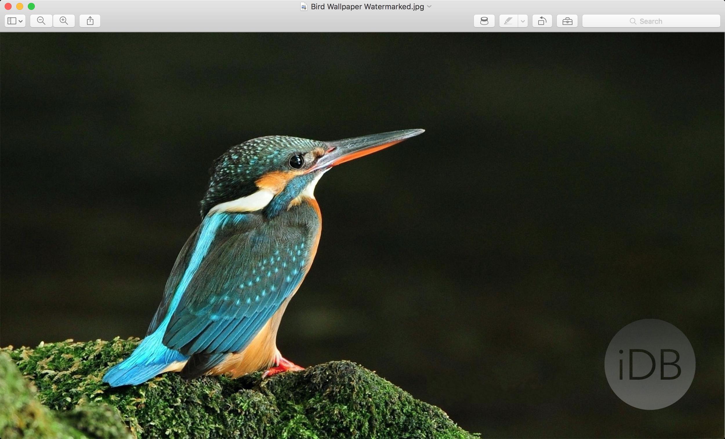 Imagen con marca de agua en la aplicación Vista previa en Mac
