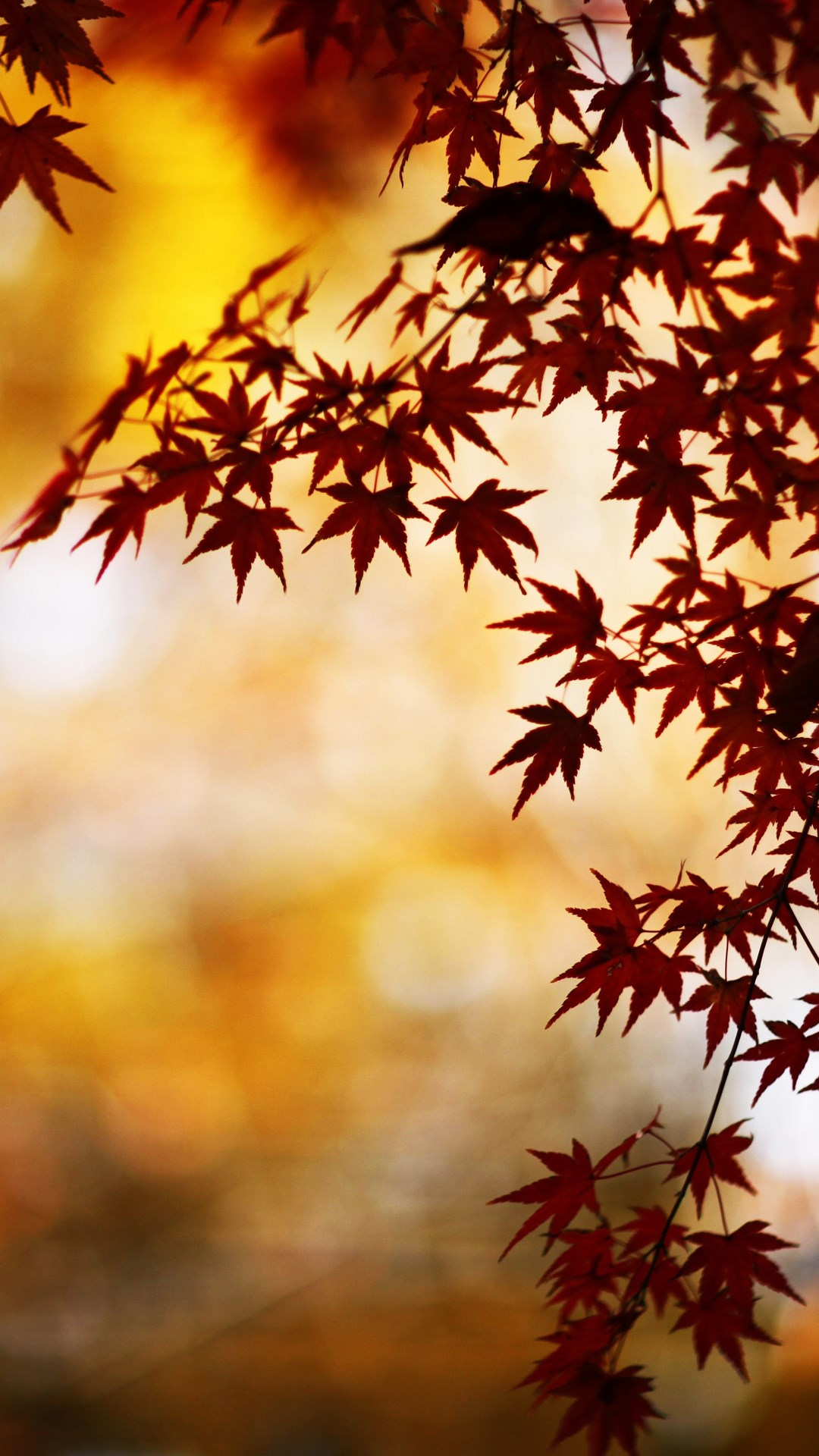 fall wallpaper iphone wallpapers of the week autumn 10575