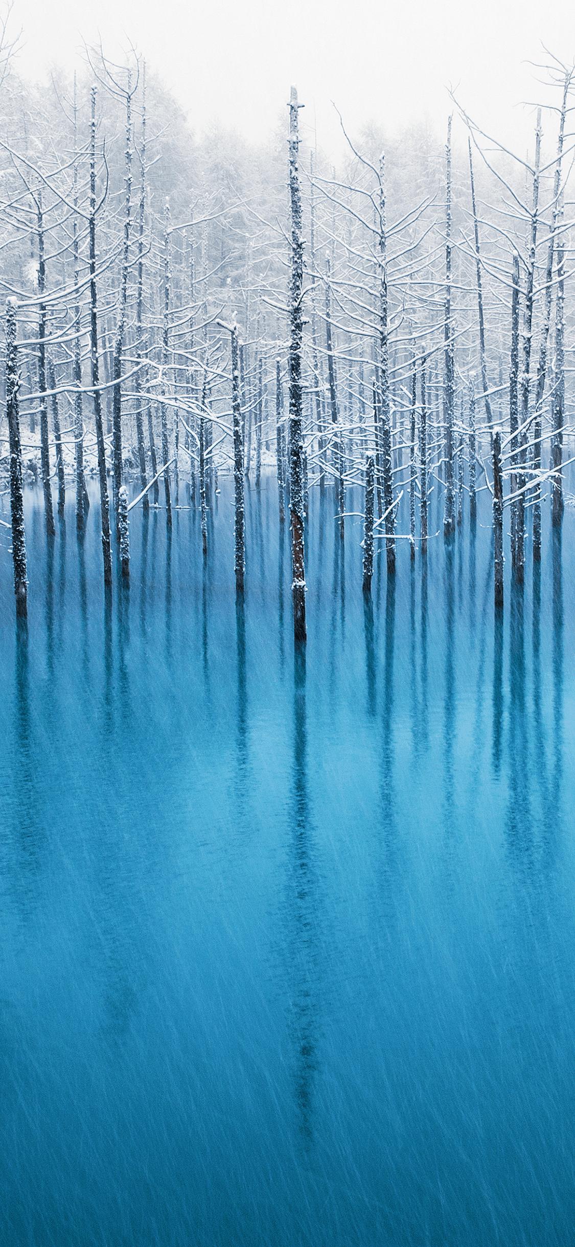 Frozen trees original Apple wallpaper