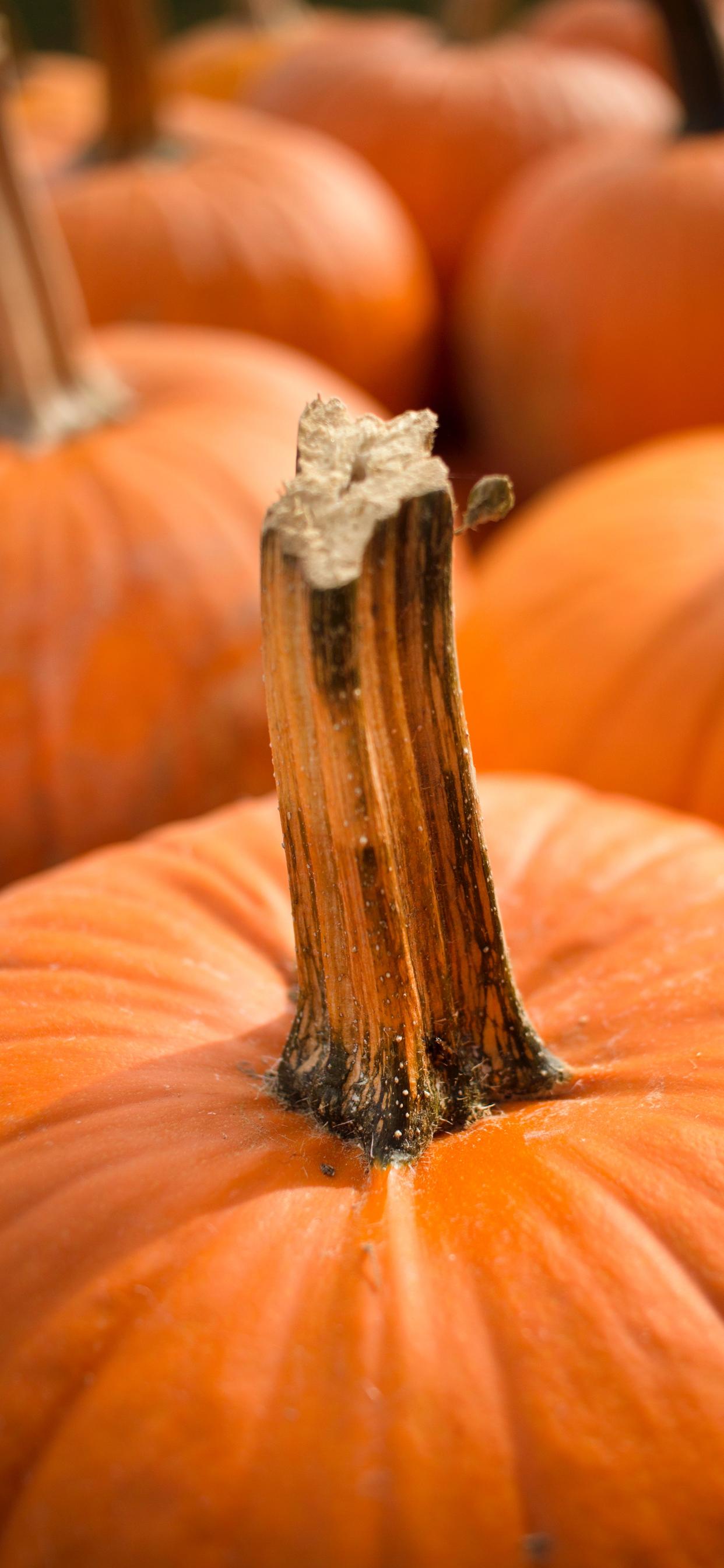 Up close with a pumpkin