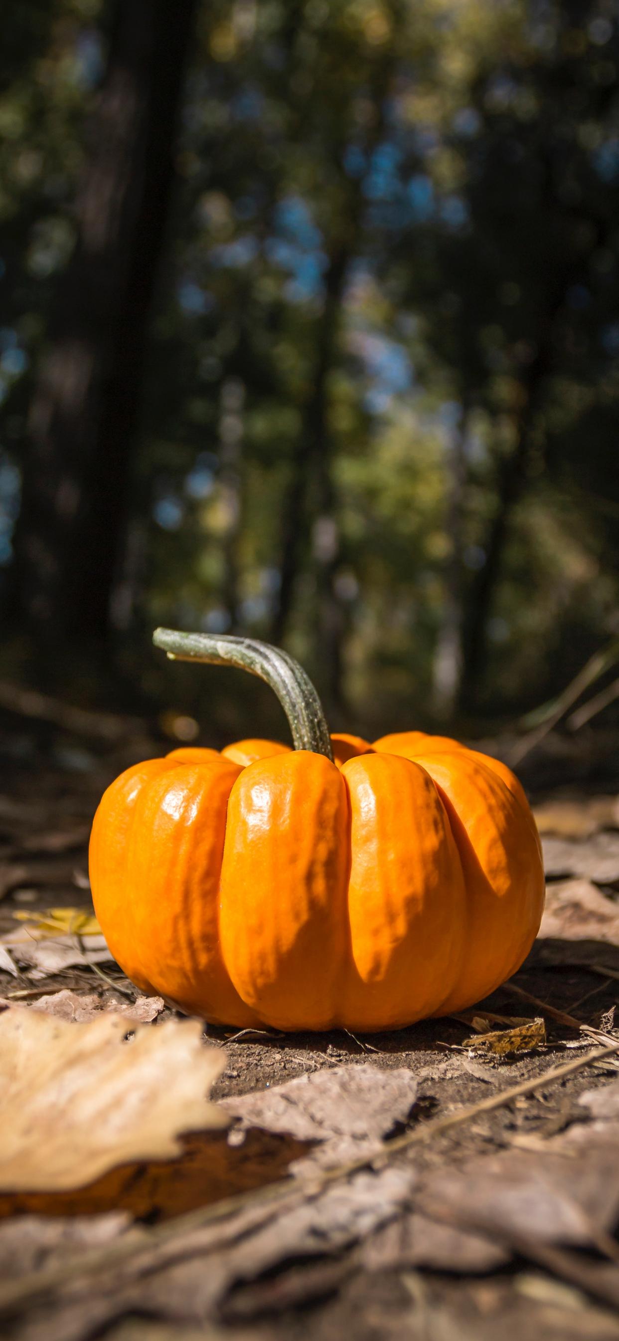 Wallpaper of one pumpkin