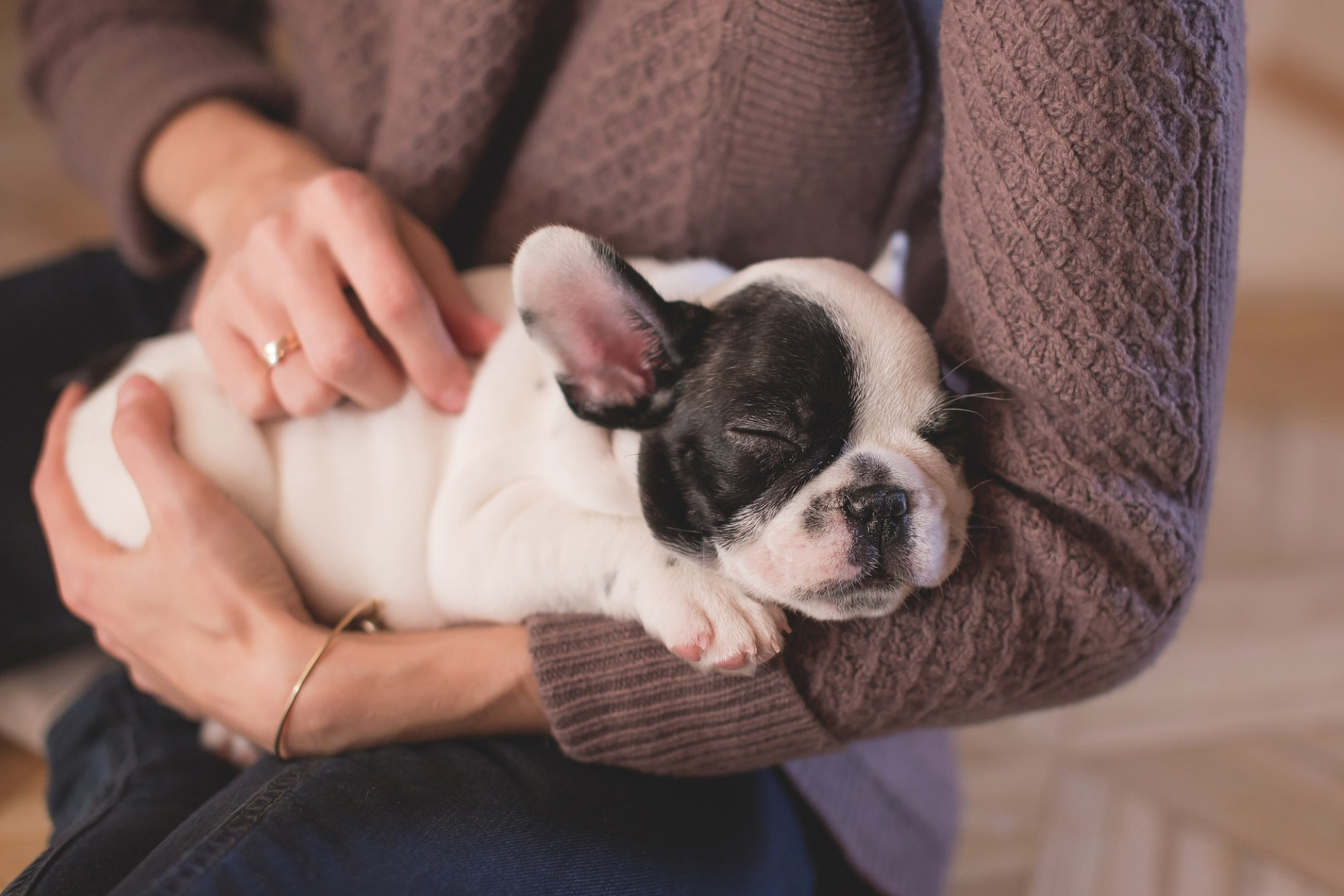 Best apps for pet lovers - bulldog