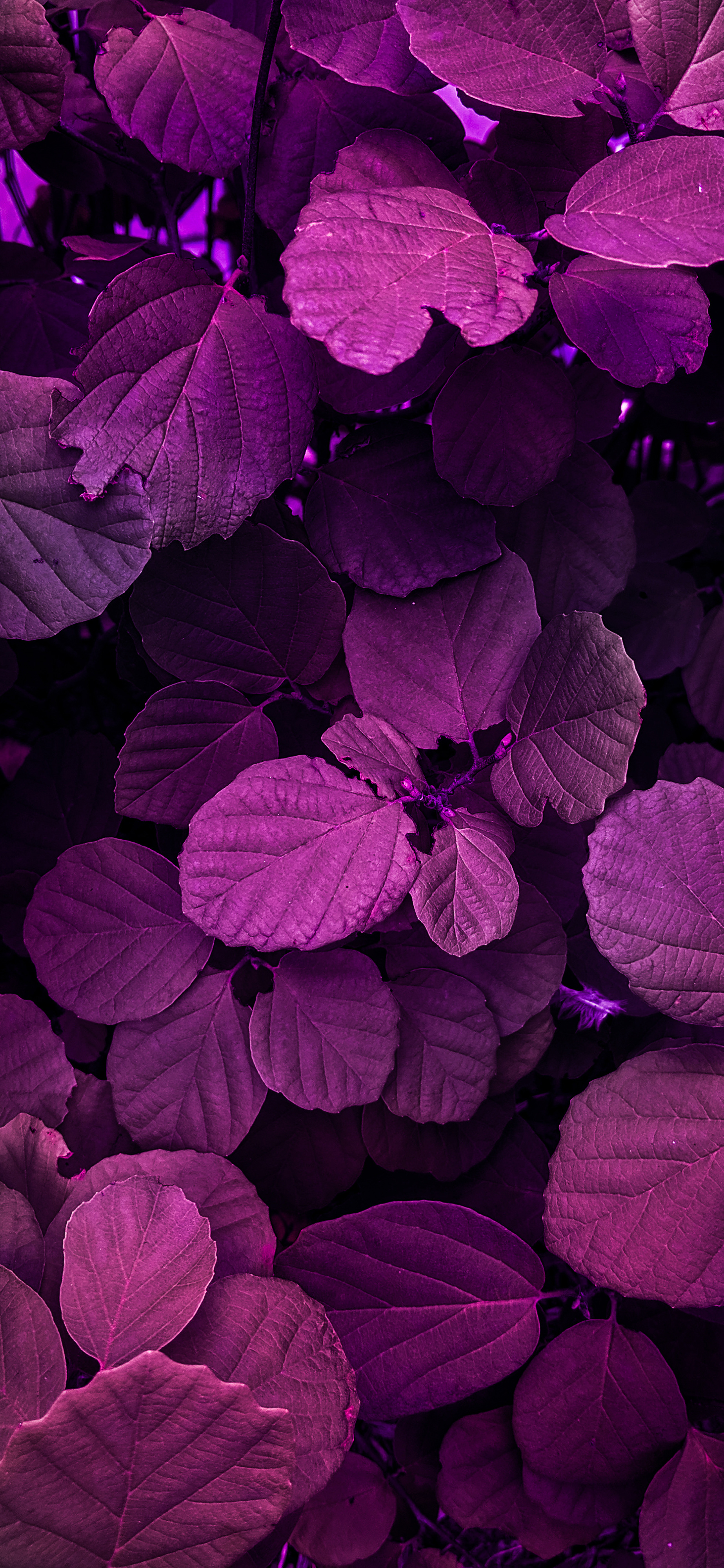 Nature photography iPhone wallpaper wallsbyjfl magenta leaves