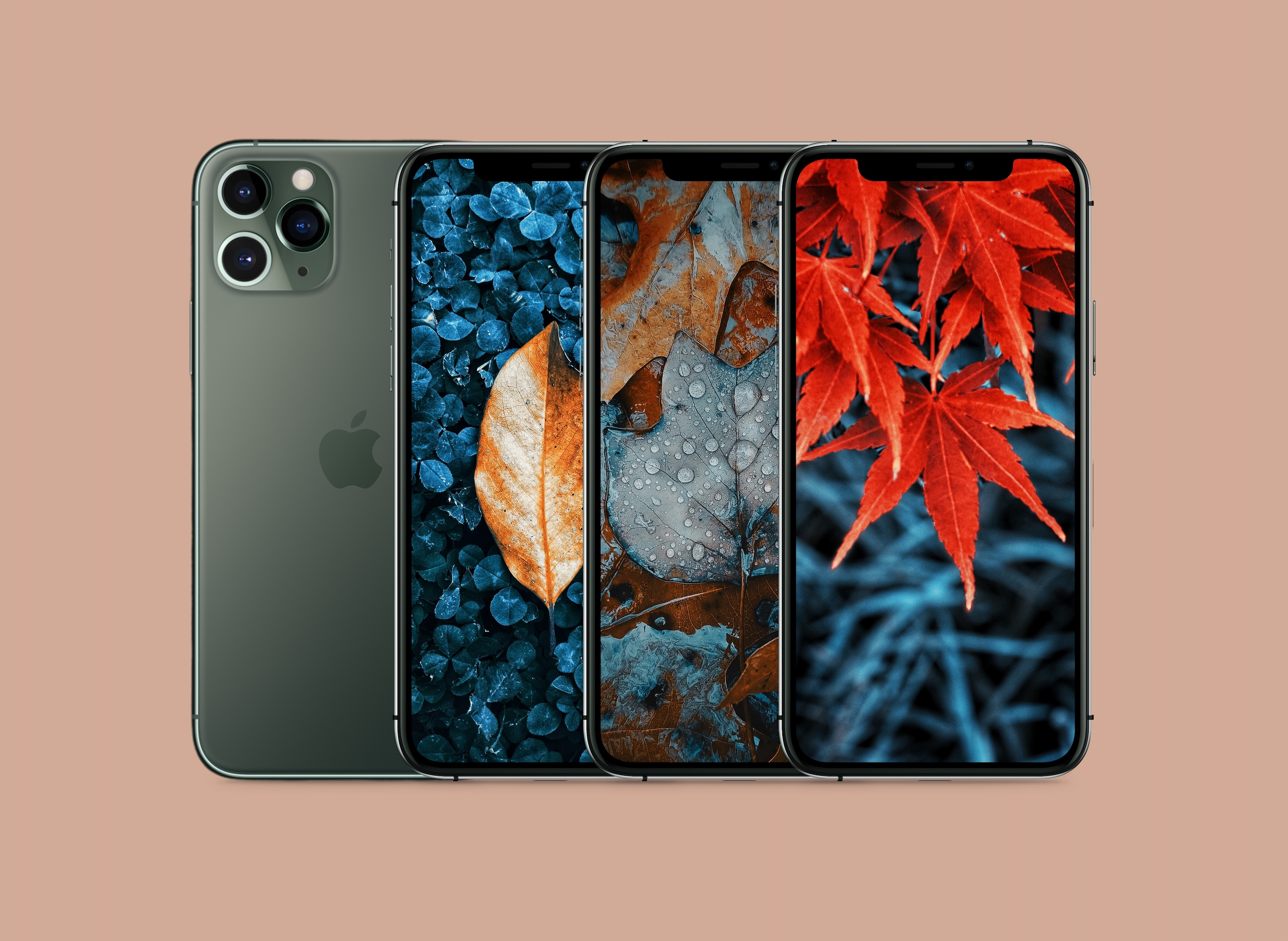 Fall Colored Autumn Leaves Wallpapers For Iphone