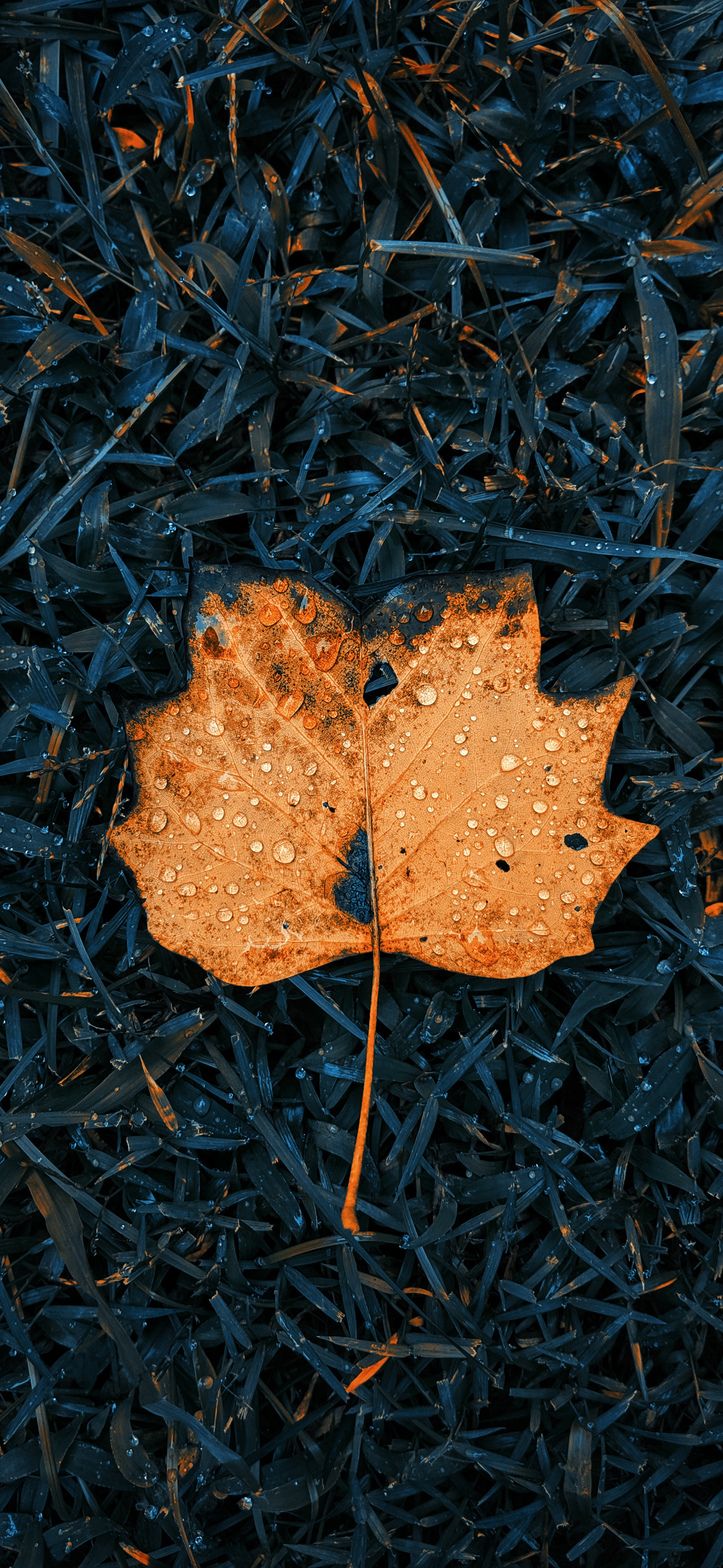 Fall leaves iPhone wallpaper wallsbyjfl 3