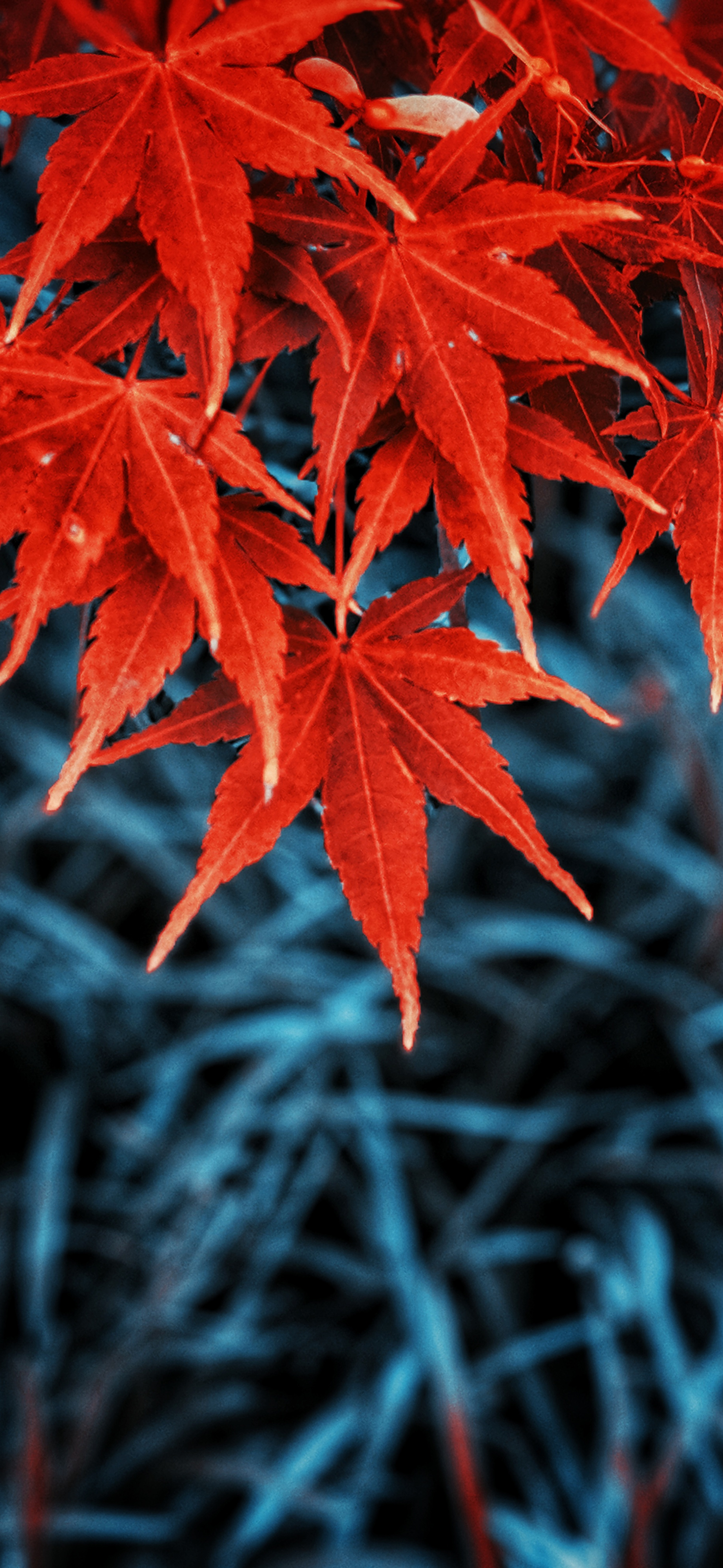 Fall leaves iPhone wallpaper wallsbyjfl 4