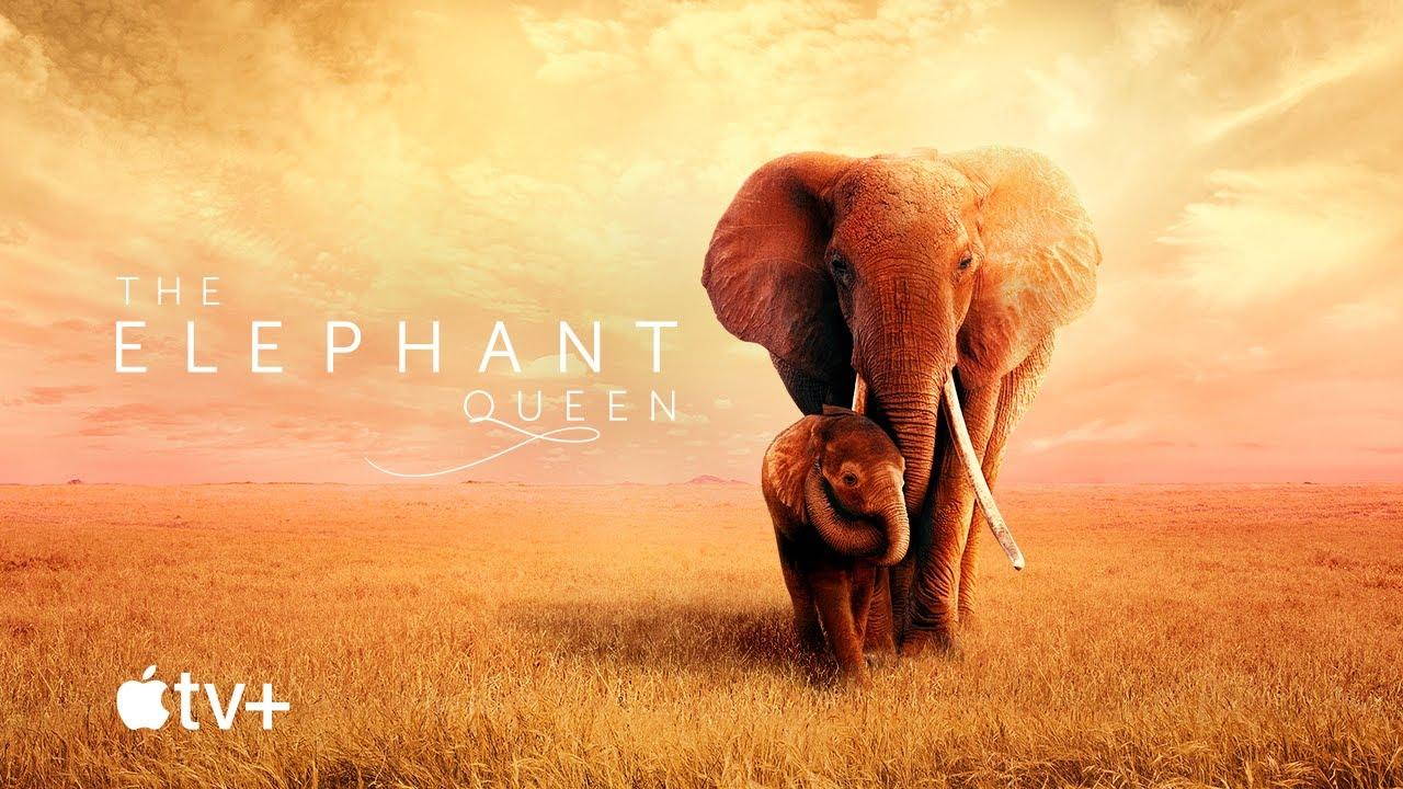 ملکه فیل ها (مستند)