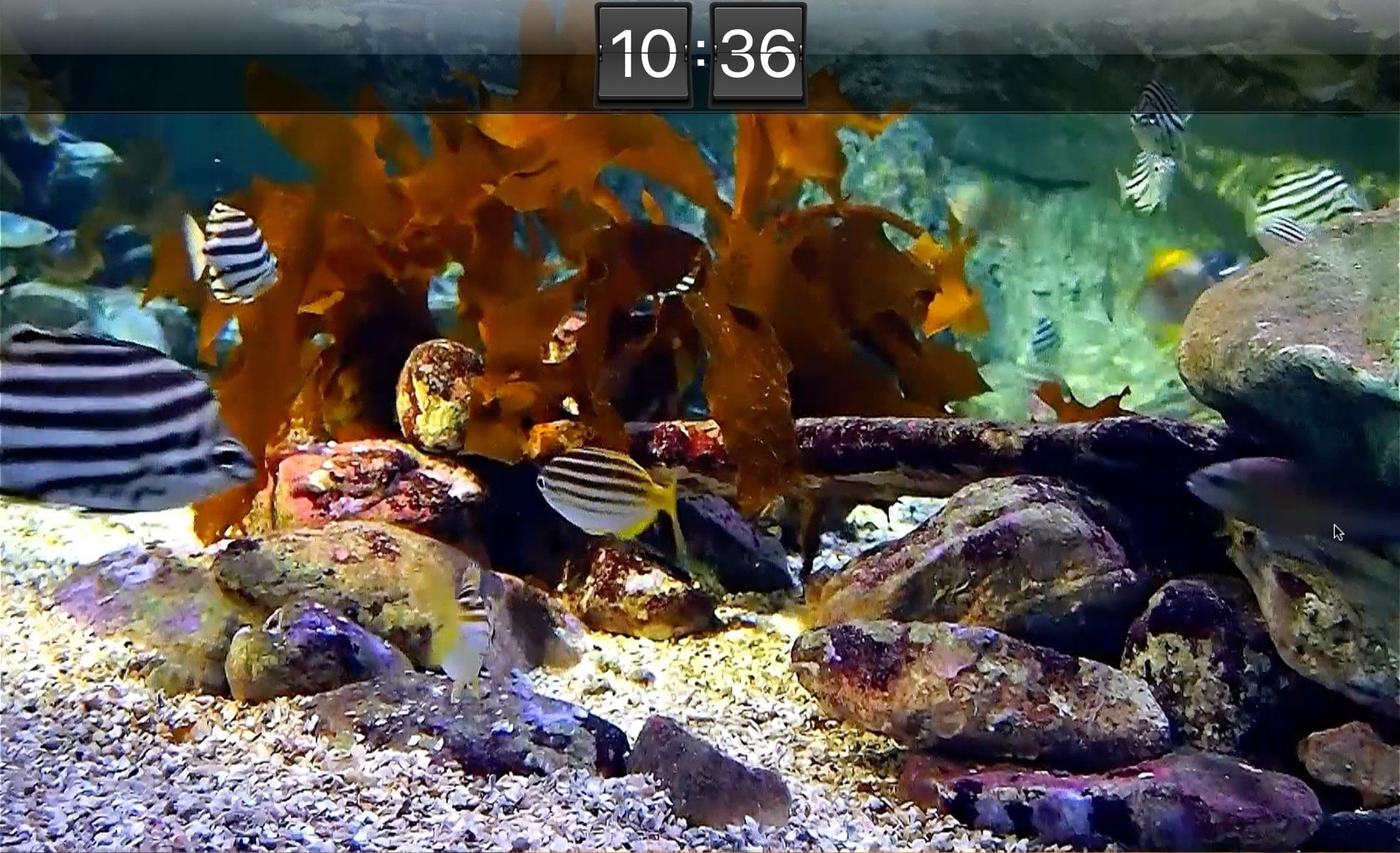 Aquarium Live HD Screensaver Mac