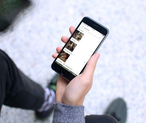 Google Photos Animations Album iPhone
