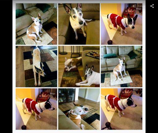 Google Photos Share Save Collage Web