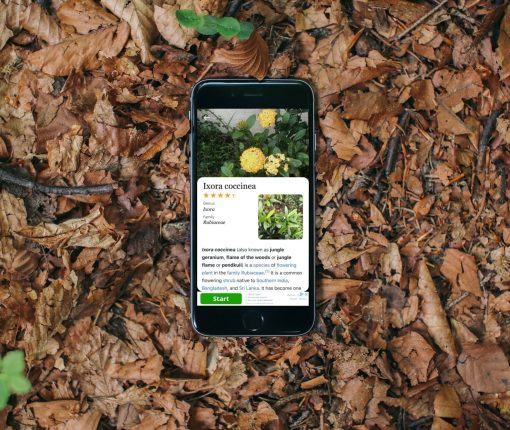 Plant identifier apps iPhone - Plant Identification Plant ID