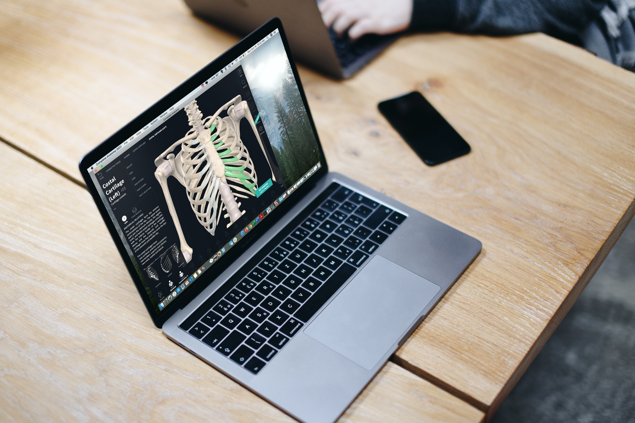 The best free anatomy apps for Mac for medical students