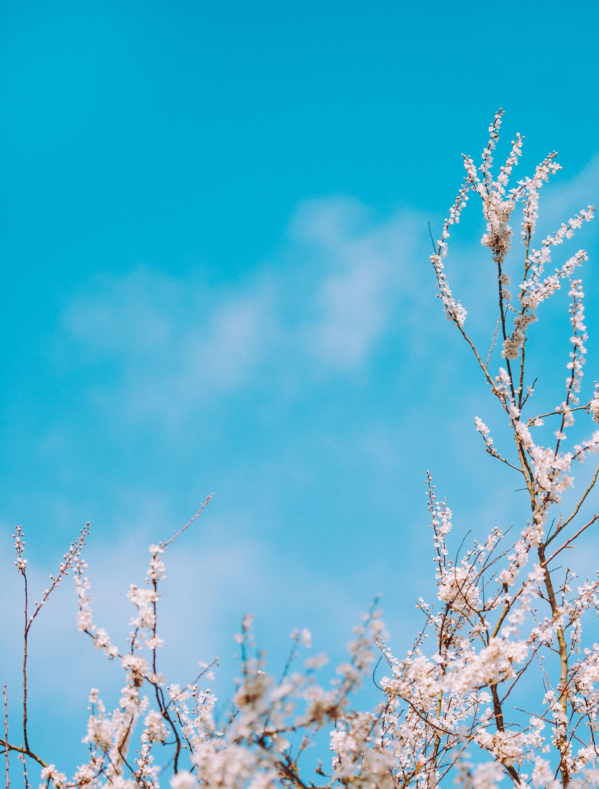 blue photography iPhone 12 wallpaper annie-spratt