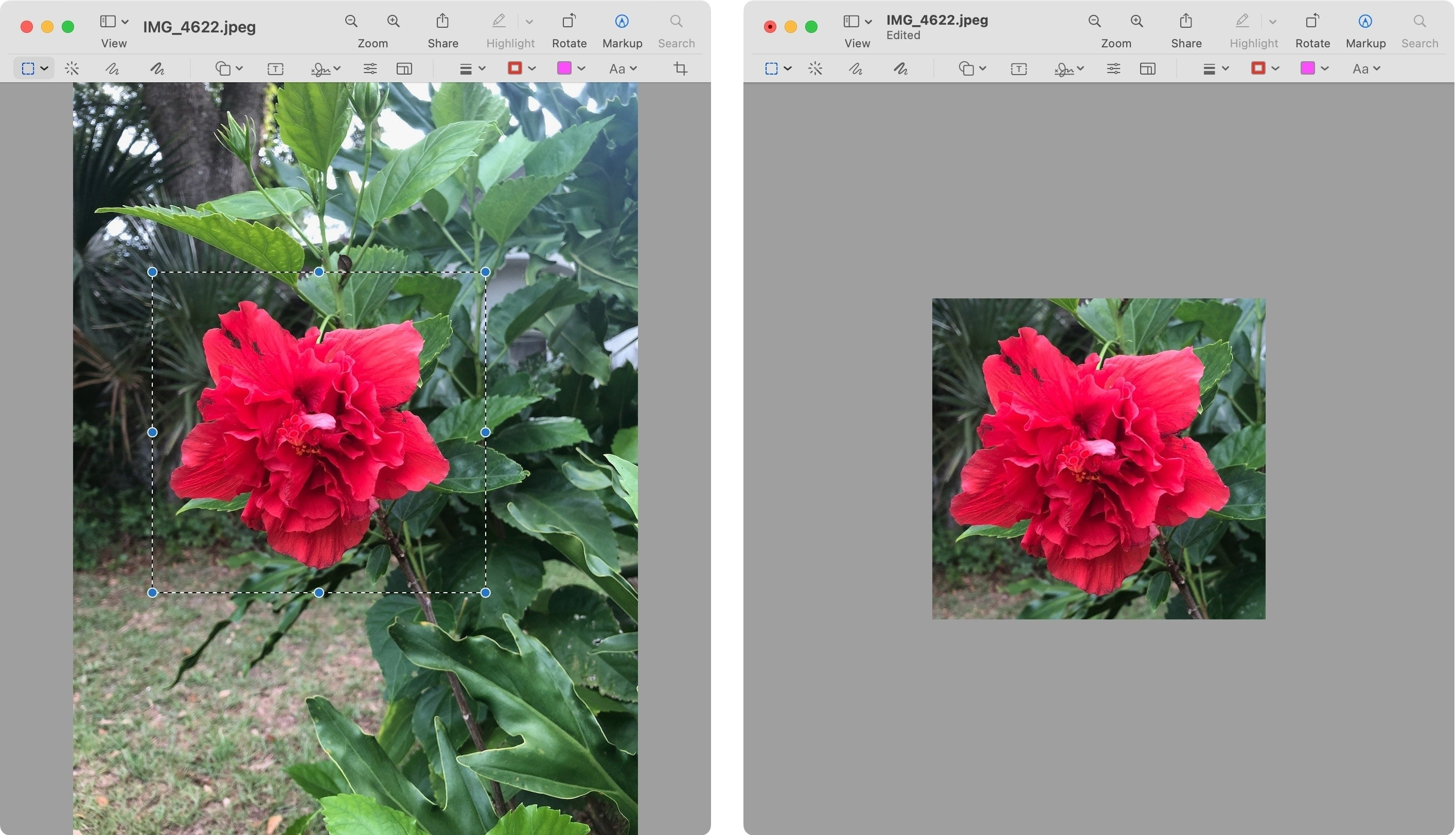 Crop an Image on Mac with Preview
