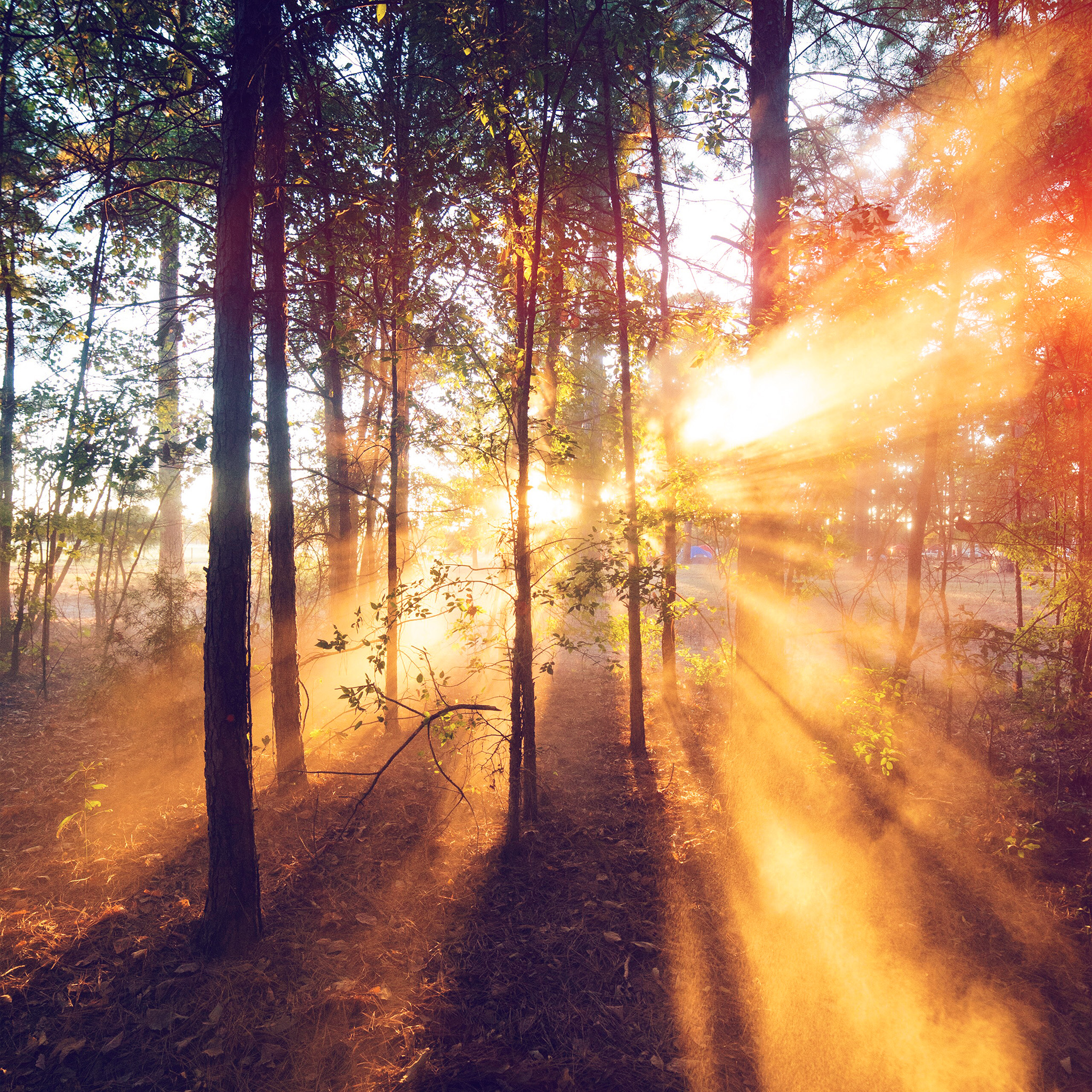 sunrise wallpaper forest rays