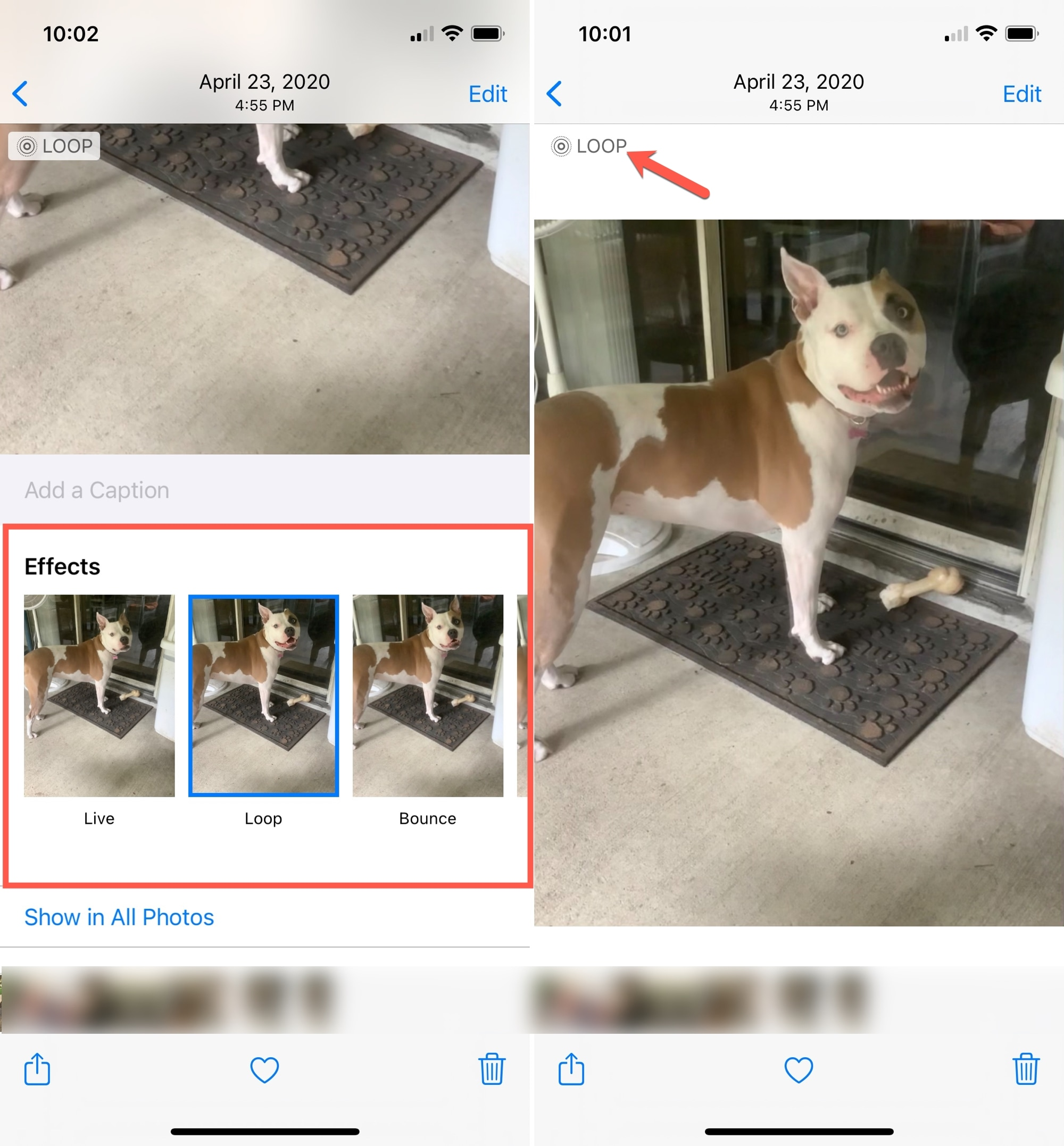 Add Loop to Live Photo on iPhone