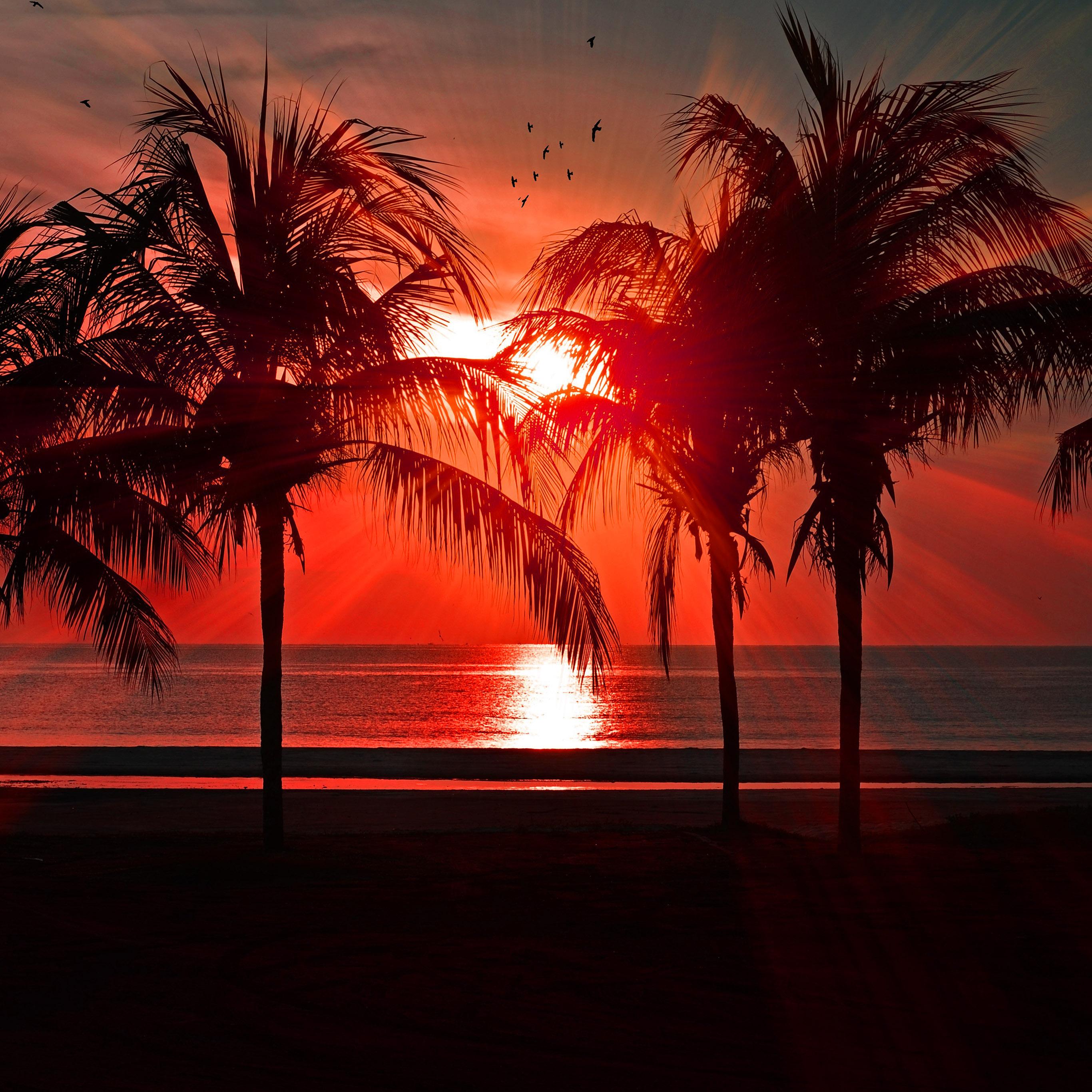 summer wallpaper iphone idownloadblog sunset palm trees
